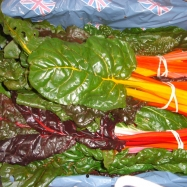 The beauty of rainbow chard, organic Kent